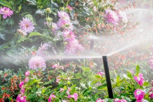 Choosing the Right Irrigation System